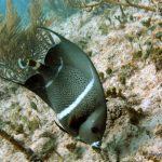 Best Diving spots in Playa Del Carmen