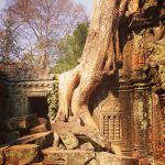 Photo of the Day: Ta Prohm