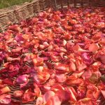 Photo Of The Day: Rose Petals