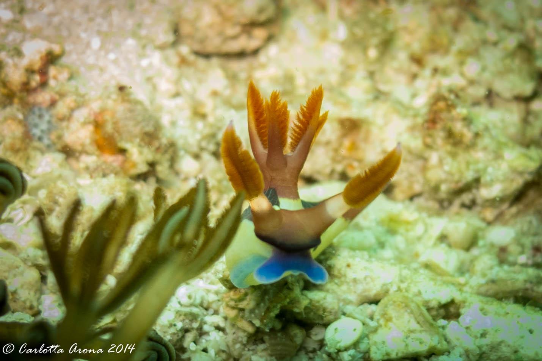 Komodo, Scuba Diving