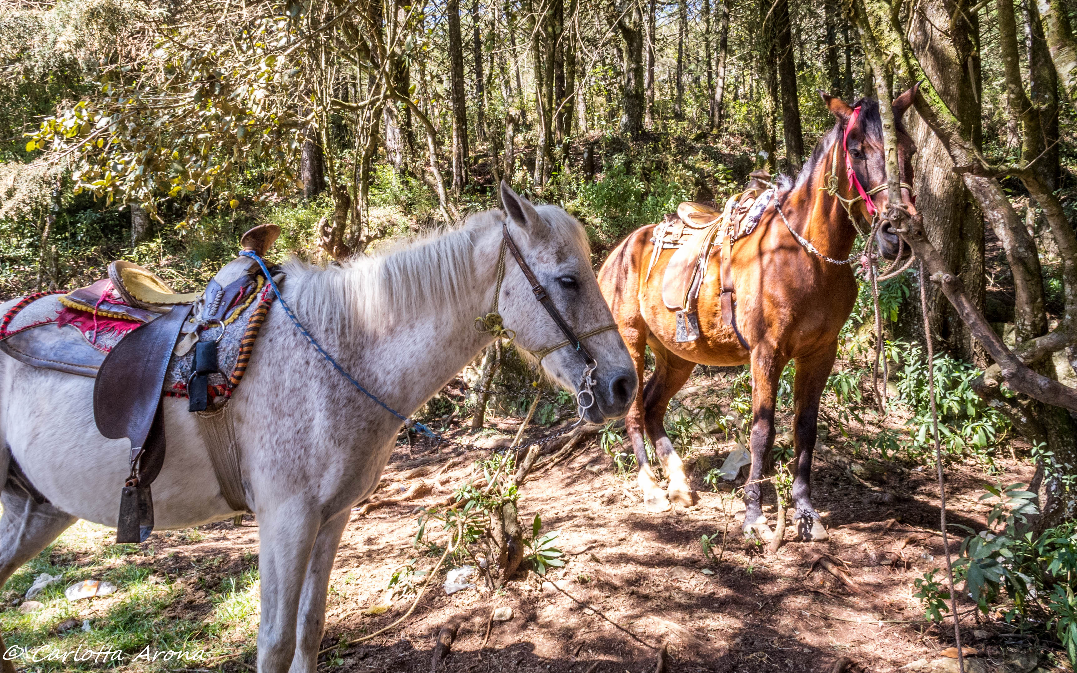 San Cristobal Horse Riding